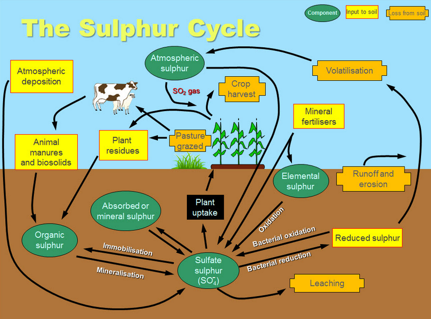 The Organic Sulfur Cycle Has Been Broken