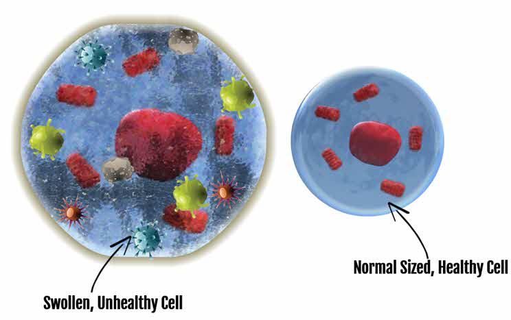 Inflammation in cells can be driven by low sulfur