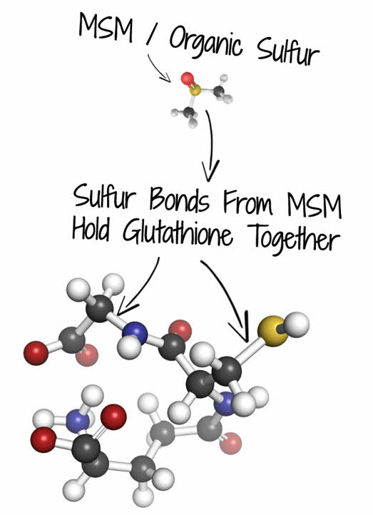 MSM and Glutathione Production