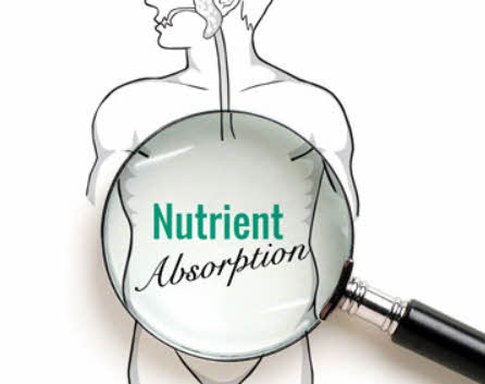 msm drops are an excellent nutrient absorption enhancer