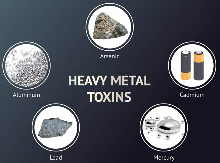 examples of heavy metals MSM helps remove