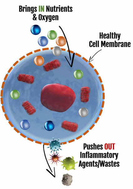 MSM Helps Cell Membranes Remove Inflammation at the Source