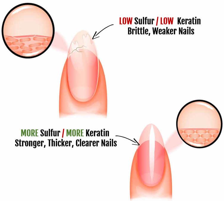 Organic Sulfur Helps Grow and Strengthen Hair