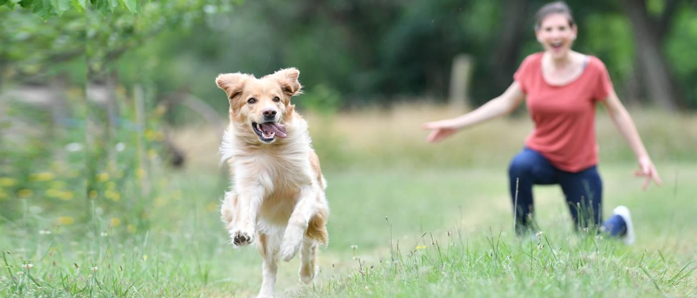 Happy Healthy Pets