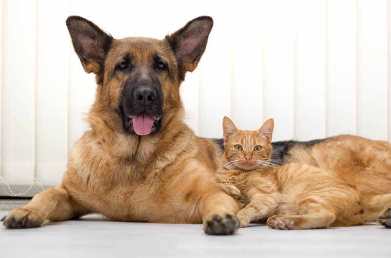 MSM for Dogs, Cats and Horses