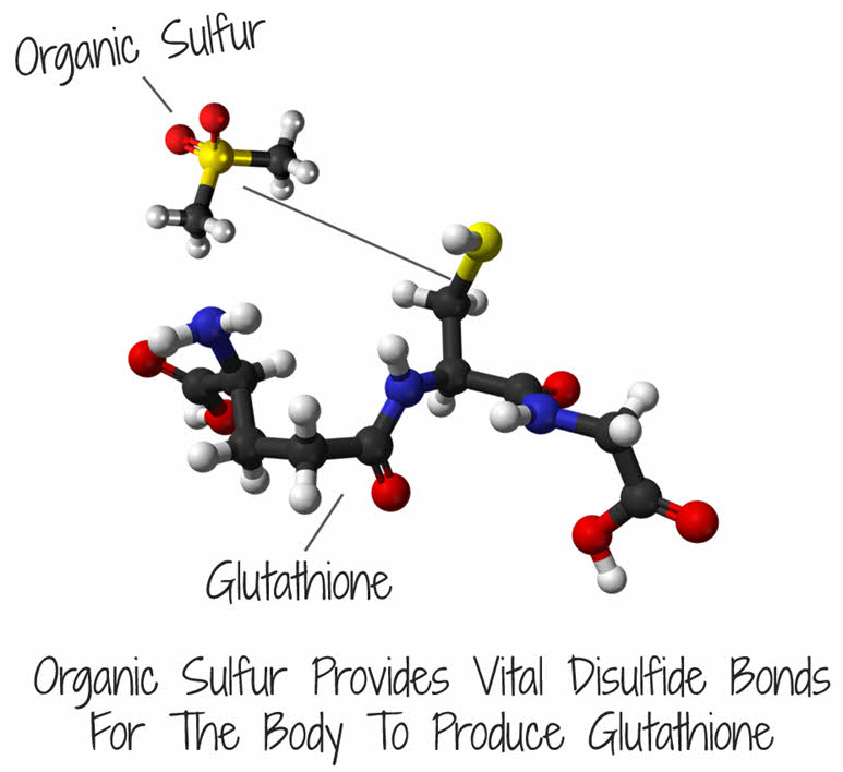 The body needs Organic Sulfur to help with Glutathione production