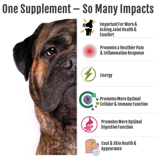 Many impacts for dogs, cats and horses