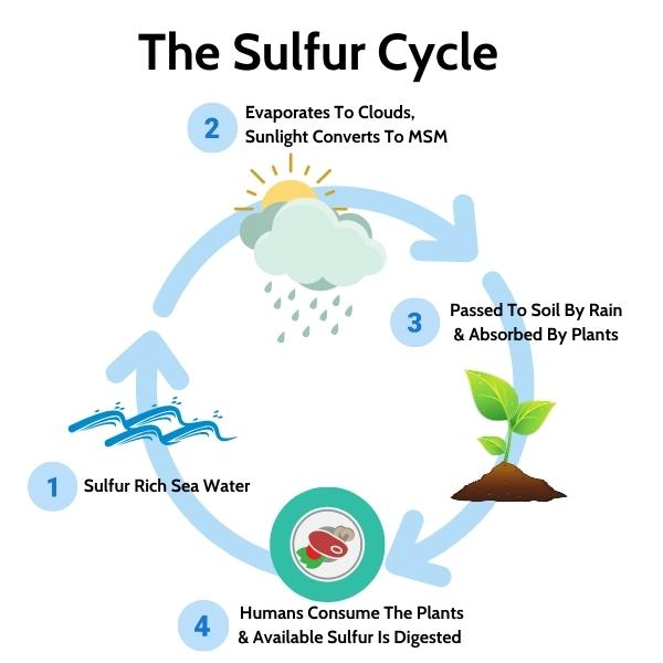 The Sulfur / Sulphur Cycle