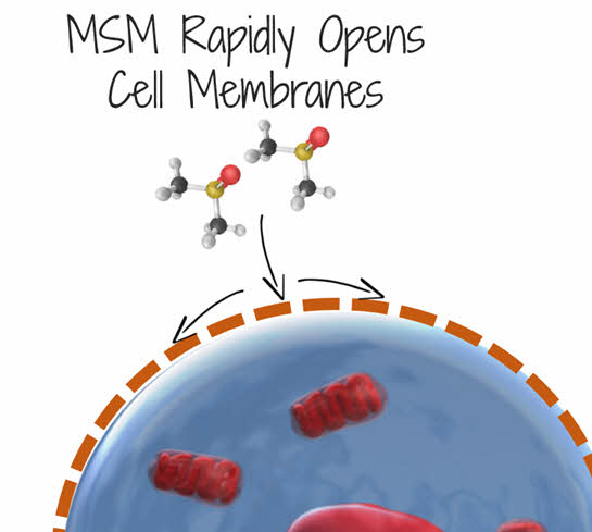 msm opens cell membranes up